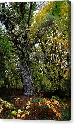 Is That Treebeard? Canvas Print by Mark Callanan
