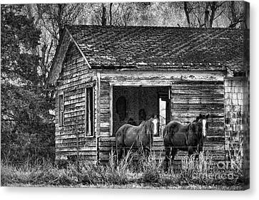 Is This Our Barn Canvas Print by Betty LaRue