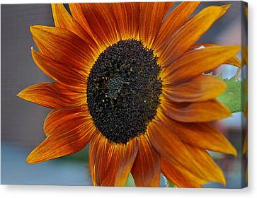 Canvas Print featuring the photograph Isabella Sun by Joseph Yarbrough