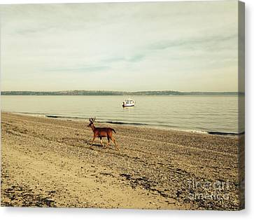 Island Deer Canvas Print