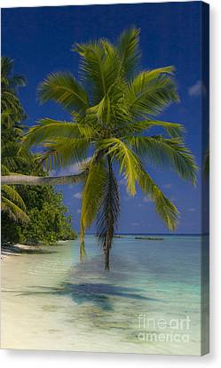 Island Dream Canvas Print by Dee Cresswell