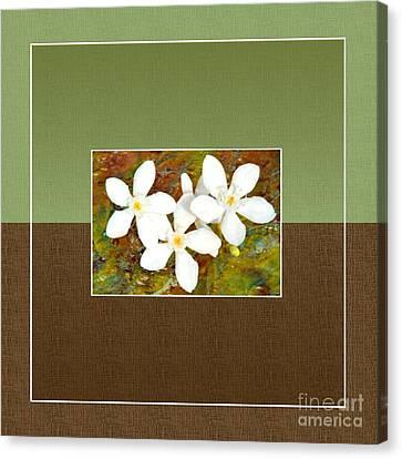Islander-no1 Canvas Print by Darla Wood