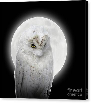 Isolated White Owl In Night With Moon Canvas Print by Angela Waye