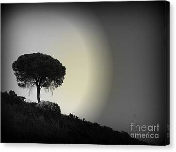 Canvas Print featuring the photograph Isolation Tree by Clare Bevan