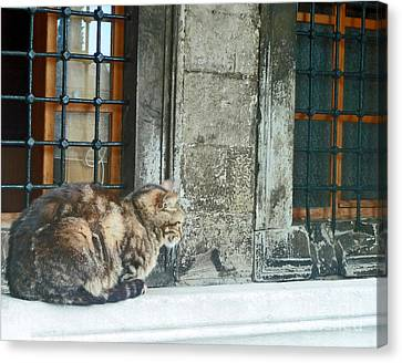 Istanbul Cat Canvas Print