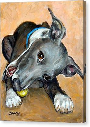 Italian Greyhound With Ball Canvas Print by Dottie Dracos