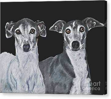 Rescued Greyhound Canvas Print - Italian Greyhounds Portrait Over Black by Kate Sumners