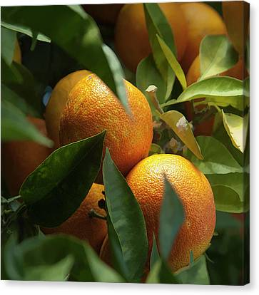 Canvas Print featuring the photograph Italian Oranges by Michael Flood