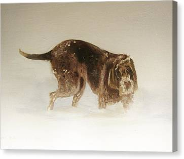 Italian Spinone In The Snow Canvas Print