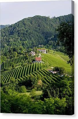 Italian Wine Prosecco Canvas Print by Salvatore Gabrielli