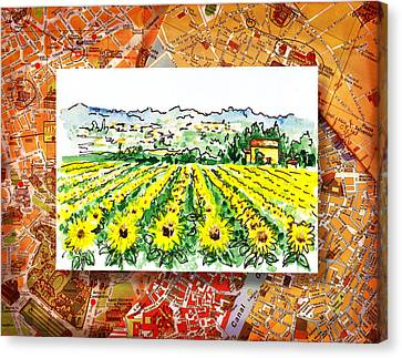 Italy Sketches Sunflowers Of Tuscany Canvas Print
