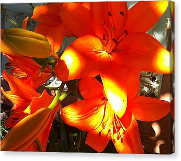It's A Beautiful Day Lily Canvas Print by Stephanie Aarons