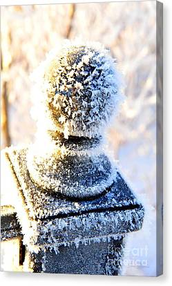 Northern Canvas Print - It's A Bit Nippy Out by Terri Gostola