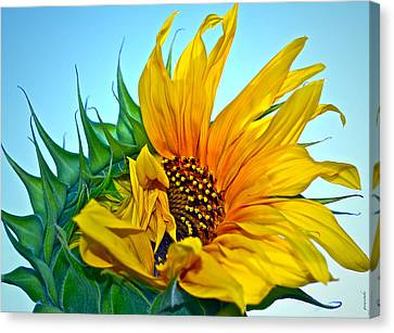 Its A New Dawn Canvas Print by Gwyn Newcombe