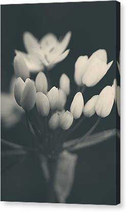 Flower Buds Canvas Print - It's A New Life by Laurie Search