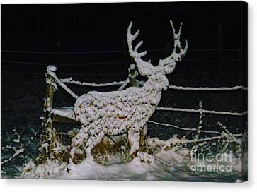 It's Cold Out Here Canvas Print by Dale Jackson