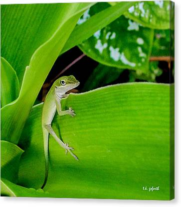 It's Easy Being Green Squared Canvas Print by TK Goforth