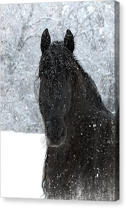 Horse In Art Canvas Print - It's Friesian Out Here by Fran J Scott