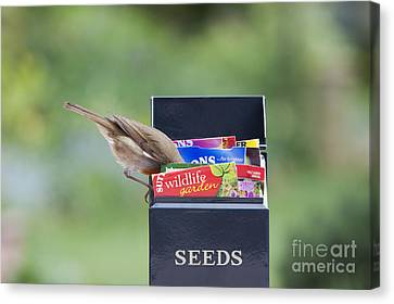 Feeding Canvas Print - Its In Here Somewhere by Tim Gainey