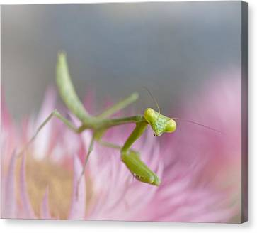It's Not Easy Being Green Canvas Print by David and Carol Kelly
