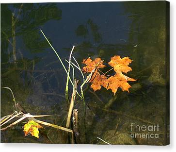 It's Over - Leafs On Pond Canvas Print by Brenda Brown