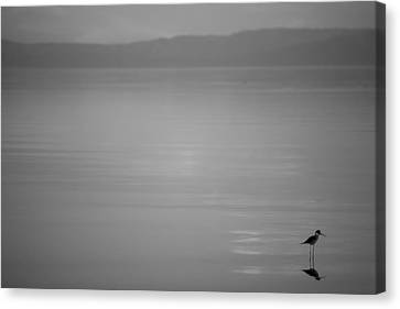 It's The Little Things - Black And White Canvas Print by Peter Tellone