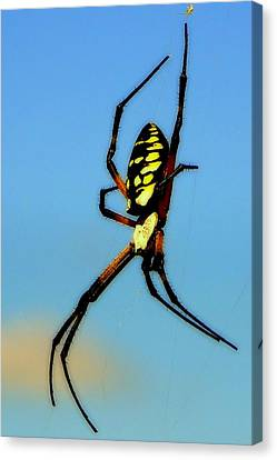 Itsy Bitsy Spider Canvas Print by Karen Wiles