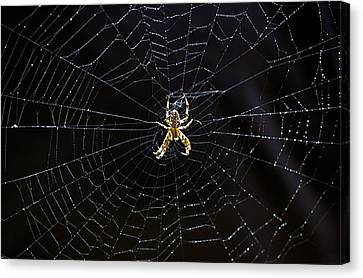 Itsy Bitsy Spider My Ass 2 Canvas Print by Steve Harrington