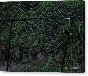 Itsy Bitsy's Spider Web Canvas Print by Amy Stuart Langlo