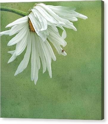 Canvas Print featuring the photograph Itsy Spider by Sally Banfill