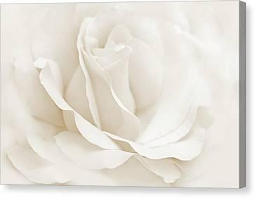 Ivory Ballerina Rose Flower Canvas Print