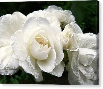 Ivory Rose Bouquet Canvas Print