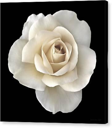 Ivory Rose Flower Portrait Canvas Print