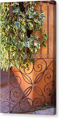 Ivy And Old Iron Gate Canvas Print by Ben and Raisa Gertsberg
