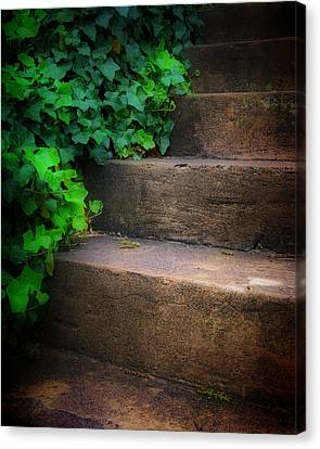 Ivy Beside Steps Canvas Print by Steve Hurt