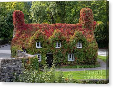 Ivy Cottage Canvas Print by Adrian Evans