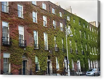 Dublin Building Colors Canvas Print - Ivy Dublin Ireland by Betsy Knapp