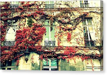 Ivy Growing On A Wall   Canvas Print