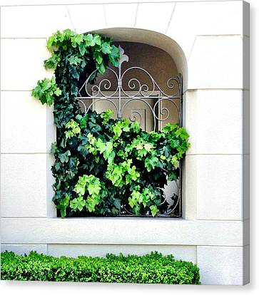 Ivy Canvas Print by Julie Gebhardt