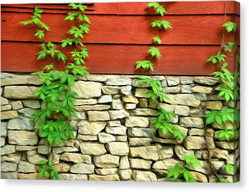 Ivy On Stone And Wood Canvas Print