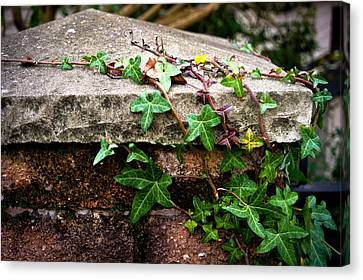 Ivy On Stone Canvas Print by Crystal Hoeveler