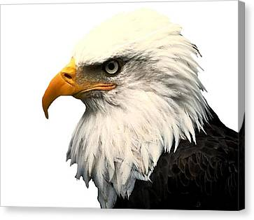 Shower Head Canvas Print - J6404 Broken Winged Bird Collection by Jill Walton