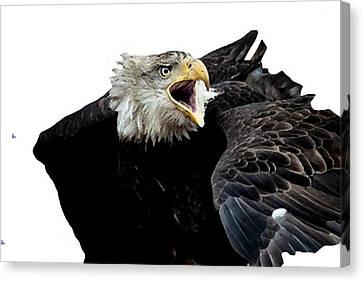 Shower Head Canvas Print - j6940 Broken Winged Bird Collection by Jill Walton