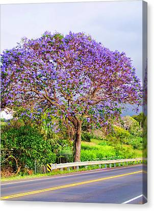 Jacaranda 4 Canvas Print by Dawn Eshelman