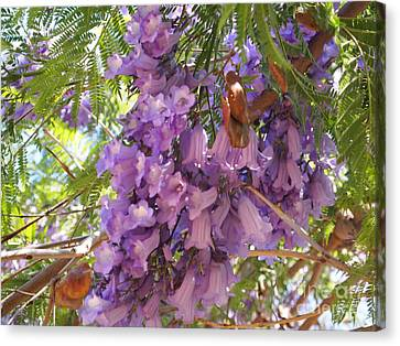 Jacaranda Blossoms 2 Canvas Print by Nancy Kane Chapman