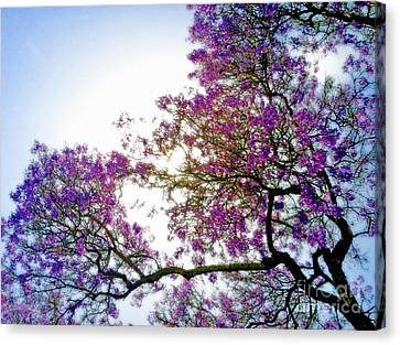 Jacaranda Glory Canvas Print by Gwyn Newcombe