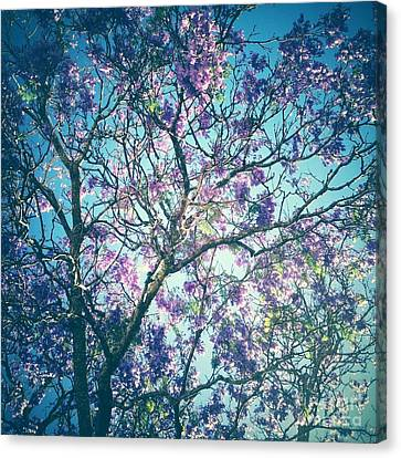 Jacaranda Tree 2 Canvas Print by Neil Overy