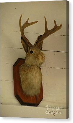 Jack-a-lope Canvas Print by Donna Brown