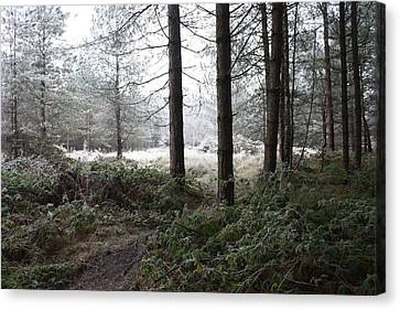 Cannock Chase Canvas Print - Jack Frost Bites Back by Jean Walker