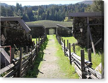Jack London Ranch Winery Ruins 5d22180 Canvas Print by Wingsdomain Art and Photography